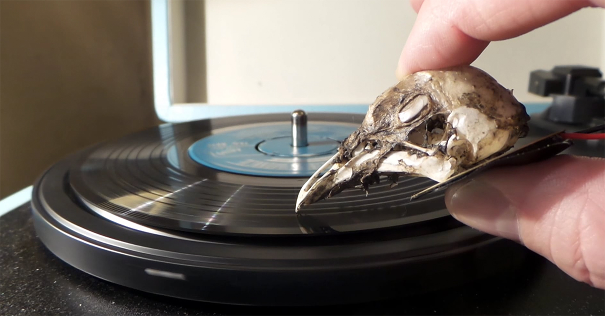 DJ Uses Seagull Skull as a Record Needle
