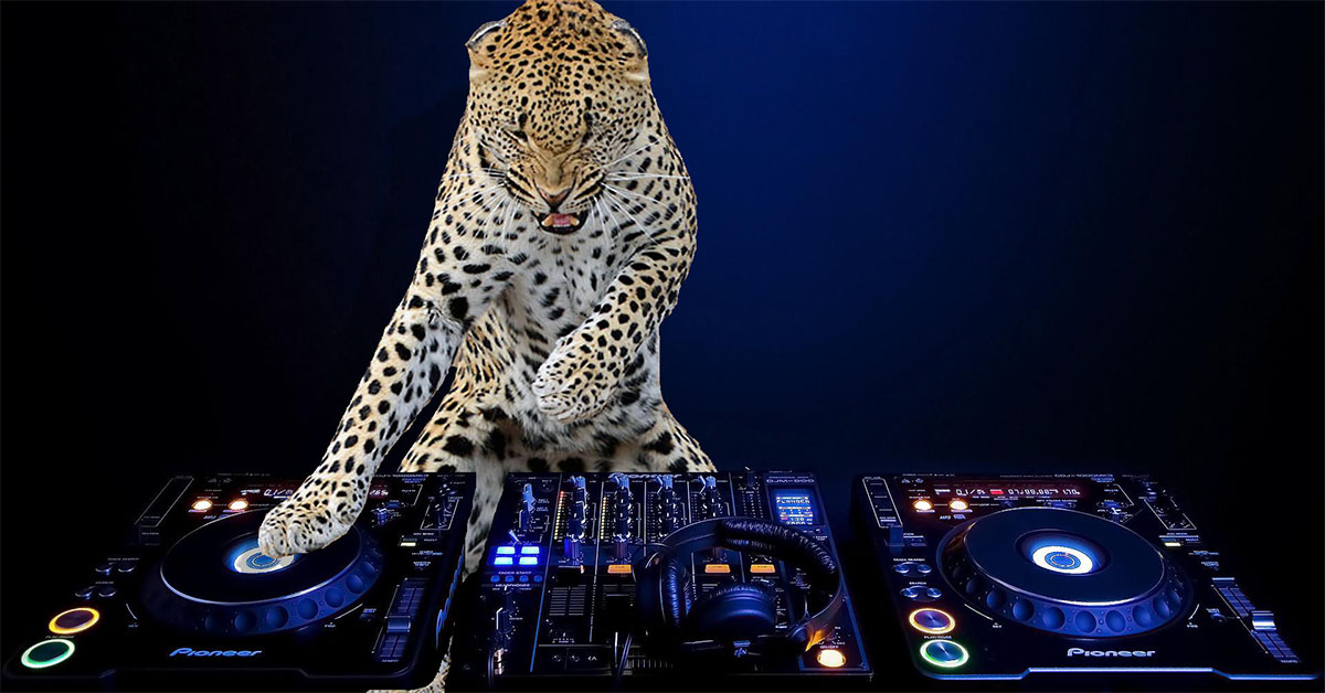 5 Main Types of DJ's: What Kind Are You?